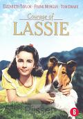 Lassie (Courage of )