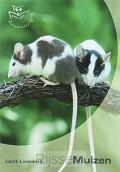 Muizen dierverzorging